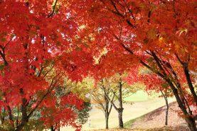 オープンコンペ「秋の味覚」